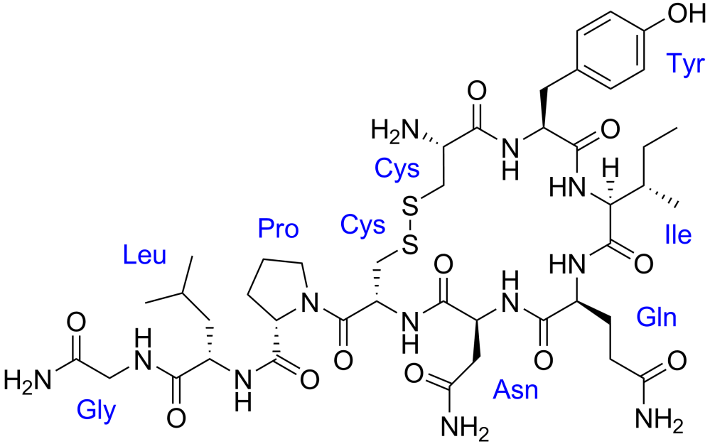 Oxytocin_with_labels